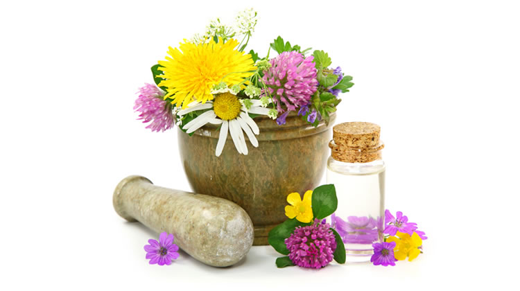 Phytotherapy Support